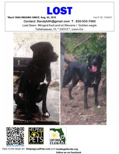 Lost Dog - Labrador Retriever - Tallahassee, FL, United States