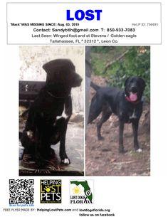 Lost Dog - Labrador Retriever - Tallahassee, FL, United States