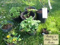 Virginia Native Shade Garden Plants, green and gold, common blue violet, confederate violet, wild blue phlox, sensitive fern, lady fern