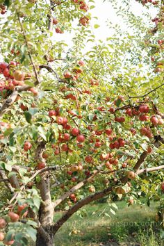 I love apple trees! I can't wait for ours to start producing fruit.