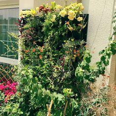 #sunnylife #sunnydubai #sunforgarden #MyDubai #dubaiart #dubai #fadiradi #sun_after_rain #gardenlove #gardenmagic #gardendesign #diygarden #diygardendesign #Mudon_Villas #Mudon #dp #dubaistyle