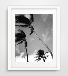 Palm Photography Palm Tree Wall Art Black by MelindaWoodDesigns