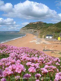 Golden Cap, Dorset Short Break Holidays, Places To Travel, Places To Go, Torquay Devon, Lulworth Cove, Dorset Coast, Jurassic Coast, Devon And Cornwall, British Countryside