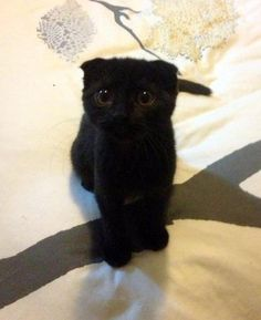 I want a black kitty. <3