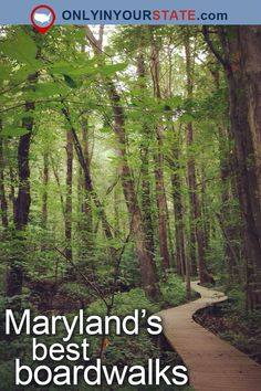 Travel | Maryland | Attractions | Boardwalks | Places To Visit | USA | East Coast | Outdoor | Adventure | Waterfront | Old Line State | Ocean City | Things To Do | Islands | Swamp | Forest | Natural Beauty | Easy Hikes | Promenade | Sanctuary | Fishing Pier | Beaches | Nature | Day Trips
