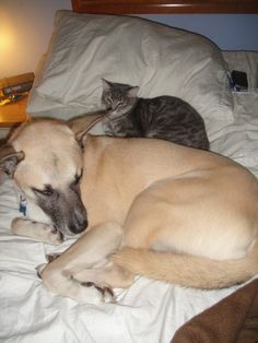 Cats and dogs sleeping together