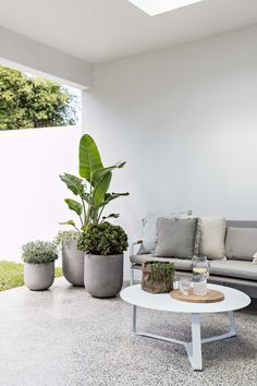 11 indoor tropical plants ideas that you can try in your apartment 16 - Garden Care tips, Garden ideas,Garden design, Organic Garden Outdoor Pots, Outdoor Areas, Outdoor Living, Jardin Vertical Artificial, Indoor Tropical Plants, Tropical Garden, Engineered Timber Flooring, Cool Color Palette, Garden Care