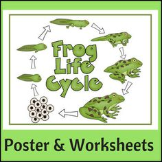 Studying life cycles? Frog Life Cycle Poster and Worksheets will be a great addition to your study. Included: Full-color poster to display in your classroom or in a Science center, a student coloring sheet identical to the poster + a worksheet that requires students to actually draw in each stage!