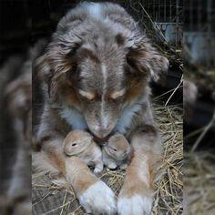 True Mom... no matter the species.  Please Adopt, Don't Shop :)