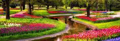 Keukenhof can be found in Lisse and is the world's second largest flower garden. Approximately 7 million flower bulbs are planted each year inside the park. The park is open each year from mid-March to mid-May. -Netherlands