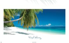 Welcome to Alphonse Island in The Seychelles. The ultimate private island, the perfect holiday destination in The Seychelles for a true nature experience. Seychelles Resorts, Seychelles Islands, Beach Holiday, Holiday Resort, Luxury Holidays, Island Resort, Island Life, Resort Spa, Hotels And Resorts