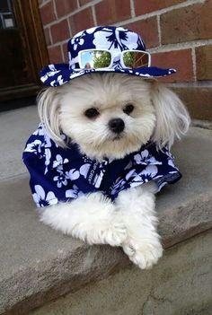 Moda para Perros y Gatos Somos SLEEPETS™ La Marca que consiente a tu mascota. Contáctenos y cotice con nosotros el diseño ideal para tu mascota! sleepets.wix.com/...