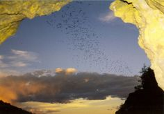 Orient Mine | Colorado Parks and Wildlife  Summer roosting site for Brazilian free-tailed bats - Saguache County
