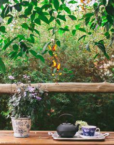 Detalhe da trepadeira Sapatinho de judia, planta com lindas flores em amarelo e vermelho.