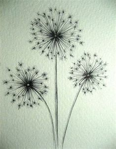 Image result for how to draw a dandelion