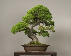 The Omiya Bonsai Art Museum, Saitama♦️More Pins Like This At FOSTERGINGER @ Pinterest ♦️