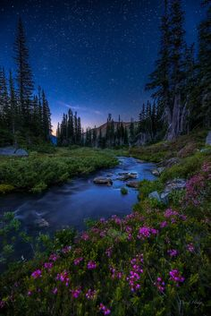 Stars Above a little stream in Olympic National Park, WA. [734x1100] Photo by David Hodge (xpost from r/UnitedStatesofAmerica) : EarthPorn