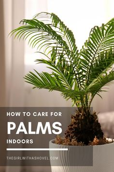Do you have an indoor palm tree?! Learn how to keep it healthy and beautiful with this post on indoor palm plant care! #indoorpalm #indoortropicals Indoor Palm Plant Care | Indoor Palm Plant Care Tips | How to Care for Indoor Palm Tree | Palm Tree Indoors | Palm Plant Care Tips | Palm Tree Care | Palm Plant Care | Indoor Palm Trees, Indoor Palms, Best Indoor Plants, Air Plants, House Plants Decor, Plant Decor, Palm Plant Care, Garden Plants Vegetable, All About Plants