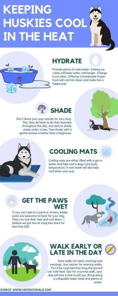 It's HOT! Our poor snowdogs suffer in the heat. Here are a few extra tips on how to keep huskies and all dogs cool on hot days. Husky Pet, Siberian Husky Puppies, Siberian Huskies, Husky Facts, Dog Facts, Baby Huskies, Dog Grooming Business, Dog Care, Puppy Care