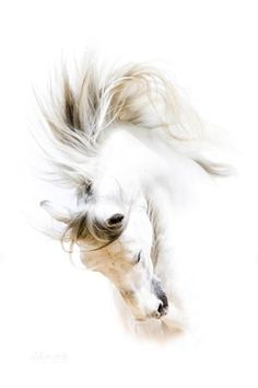 lot of carved horses have this mane in this fully tossed look....unless done right can be fragile