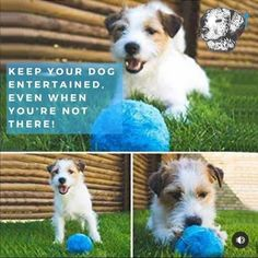 Best Dog Toys, Best Dogs, Disabled Dog, Interactive Dog Toys, Dog Nose, Dog Gifts, Cat Toys, Foto E Video, Puppy Love