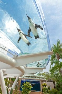 Flying penguins at the Sunshine Aquarium in Tokyo! This summer, theyll be swimming through the Sunshine Aqua Ring thats elevated 7 feet from the ground. fantastic-architecture
