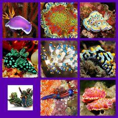 Sea slugs collage 14