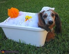 Kim: This is Larry my dachshund wearing a bubble bath. His bath tub is a styrofoam cooler. The bugles are Christmas cotton snow and bulbs.