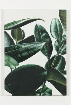 mentaltimetraveller:Oliver Osborne, Rubber Plant, 2013, oil on linen, 56 x 40 cm, 22 x 16 ins