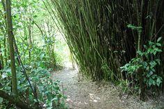 La Réunion : le labyrinthe En Champ Thé - Les Gommettes de Melo