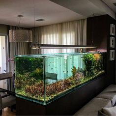 "8,349 Likes, 40 Comments - Aquarium Hobby (@aquariumhobby) on Instagram: ""This is one of the more impressive aquariums on Instagram. Very cool setup. ----Photo from…"""