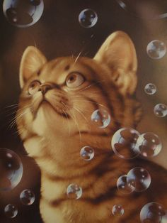 Makoto Muramatsu Cats Postcards Collection one for mjavushka one for sarkka Crazy Cat Lady, Crazy Cats, Animal Pictures, Cute Pictures, Image Chat, Cat Drawing, Cat Art, Cats And Kittens, Cute Cats