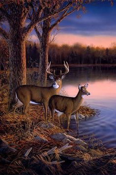 : When things work out Deer Photos, Deer Pictures, Pictures To Paint, Nature Pictures, Wildlife Paintings, Wildlife Art, Animal Paintings, Landscape Paintings, Hirsch Wallpaper
