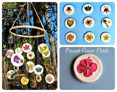 Twig and Toadstool: Pressed Flower Mobile