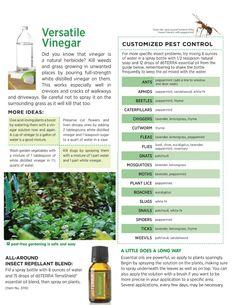 Natural bug repellent using Terrashield essential oil blend. www.onedoterracommunity.com https://www.facebook.com/#!/OneDoterraCommunity