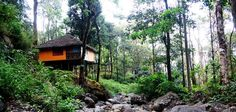 Here you can explore and book kalpetta homestay, These are the one of the best place to stay in kalpetta wayanad. Explore photos, reviews, terrif and much more with homevilas.