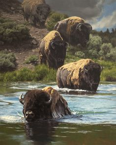 beautiful animal art Drawings is part of Beautiful And Realistic Animal Drawings Around The World - Buffalo XING American Bison, American Animals, Native American Art, Wildlife Paintings, Wildlife Art, Animal Paintings, Buffalo Animal, Buffalo Art, Majestic Animals