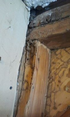 Does your home have termites? If so, you probably don't know it. Learn what to look for and what to do about termites