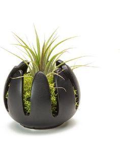 LiveTrends Lily Flower - Living Air Plant Decoration (Black) ❤ LiveTrends Design