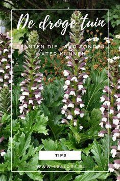 Dream Garden, Home And Garden, Architectural Plants, My Secret Garden, Acanthus, Edible Garden, Cut Flowers, Garden Planning, Amazing Gardens