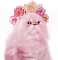 Grumpy In Pink!