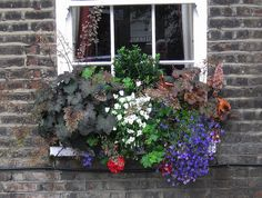 A window box filled with shade loving flowers will add a pop of color to your home's facade.