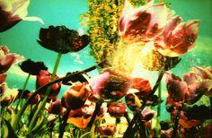 Galaxy ☆ & Flower ❀