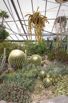 Allan Gardens 11