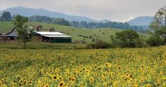 Farm Landscapes Across the State: Haywood County Mountain Research Farm - North Carolina Field and Family