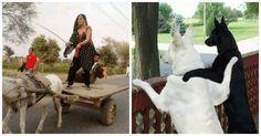 अगर हंसी-ख़ुशी के दो पल चाहिए तो ये तस्वीरें आप जरूर देखें | Punjab Kesari