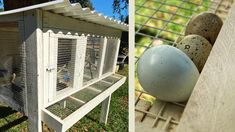 Backyard Coop, Backyard Birds, Chickens Backyard, Chicken Cages, Diy Chicken Coop, Quail Coop, Raising Quail, Beautiful Chickens, Coop Plans