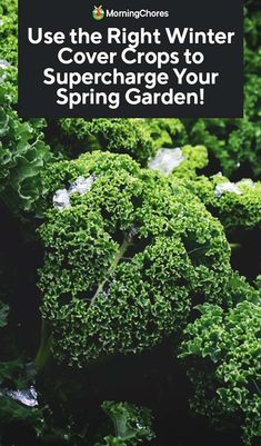 Many of us homesteaders manage large gardens from spring to fall while the weather is perfect for growing most vegetables. However, as day length declines and the climate cools, the options for what we can grow become more and more limited. So, we tend to scale back our bed space during the fall and winter...