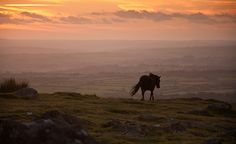 Dartmoor pony and sunset