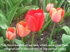"""""""Let the streamlets of our love, which come from Thee, merge at last in the vastness of Thy perfect love."""" -Paramhansa Yogananda, Whispers from Eternity"""